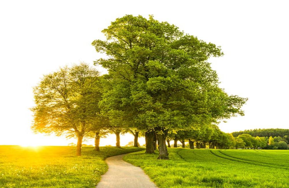 Waarom bomen zo populair zijn